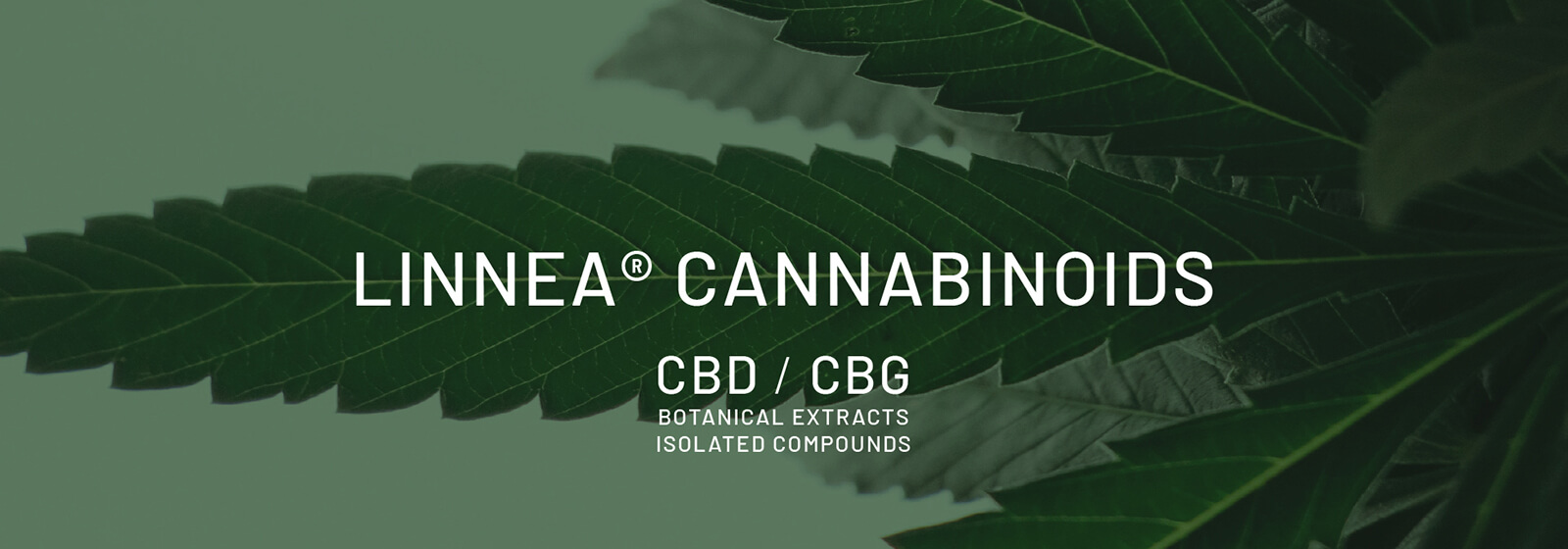 Cannabis Therapeutic Solutions
